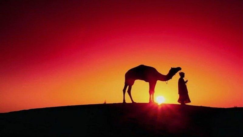 https://assets.roar.media/Bangla/2017/05/maxresdefault_camel.jpg