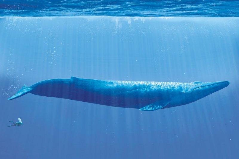 https://assets.roar.media/Bangla/2017/07/blue-whale-05.jpg