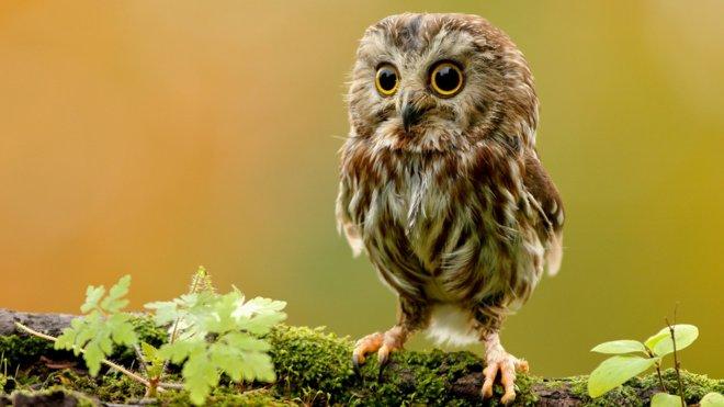 https://assets.roar.media/Bangla/2017/08/cute-owl-wallpaper-15774-16256-hd-wallpapers.jpg