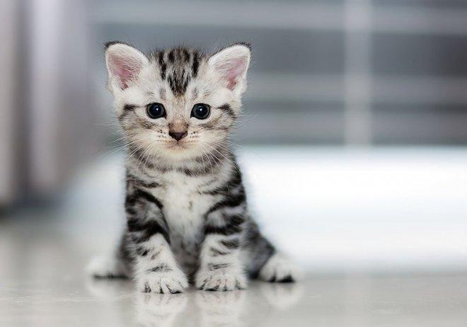 https://assets.roar.media/Bangla/2017/10/4-ways-cheer-up-depressed-cat.jpg
