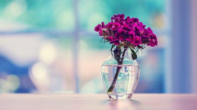 https://assets.roar.media/Bangla/2017/10/Indoor-purple-flowers-plant.jpg