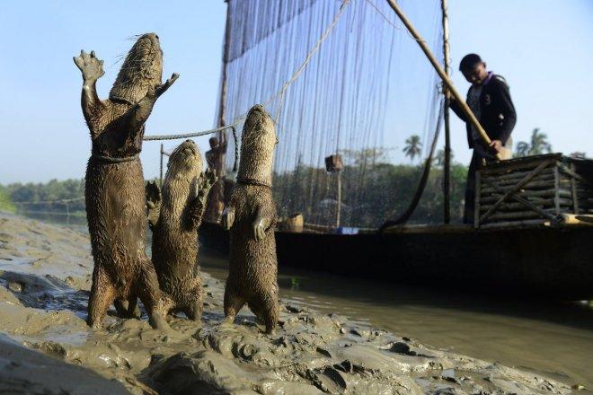 https://assets.roar.media/Bangla/2017/11/feature1.jpg