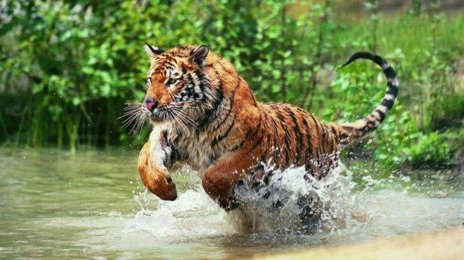 https://assets.roar.media/Bangla/2017/12/316.jpg