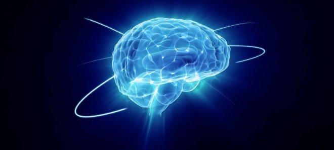 https://assets.roar.media/Bangla/2017/12/interesting-facts-about-the-human-brain.jpg