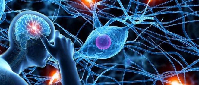 https://assets.roar.media/Bangla/2018/04/Neurological-Images-1.jpg