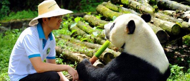 https://assets.roar.media/Hindi/2018/05/Giant-Panda-Hindi-Article.jpg