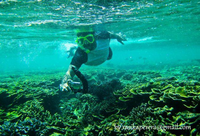 The coral reefs at Pigeon Island. Image credit Rasika Perera