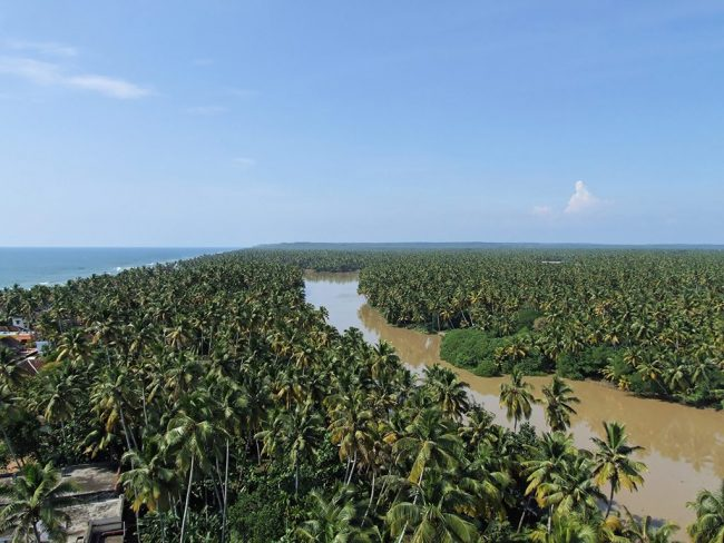 Coconut palms in the village of Anjengo, Kerala. Image Credit: Emmanuel Dyan/National Geographic Traveller India