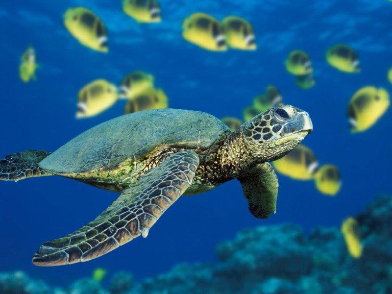 https://assets.roar.media/Sinhala/2016/04/Turtle-Cover-e1457058909249.jpg