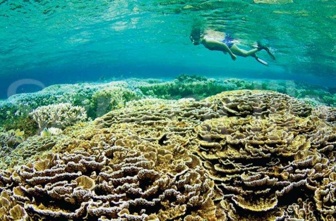 https://assets.roar.media/Sinhala/2016/04/corals_1.jpg