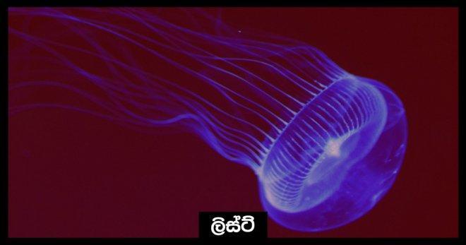 https://assets.roar.media/Sinhala/2017/10/01.Cover-pic3-e1508496520389.jpg