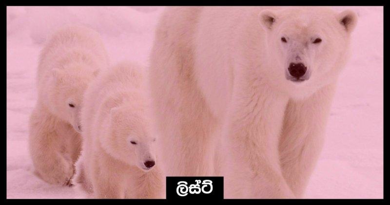 https://assets.roar.media/Sinhala/2017/12/Cover-9-e1513588148747.jpg