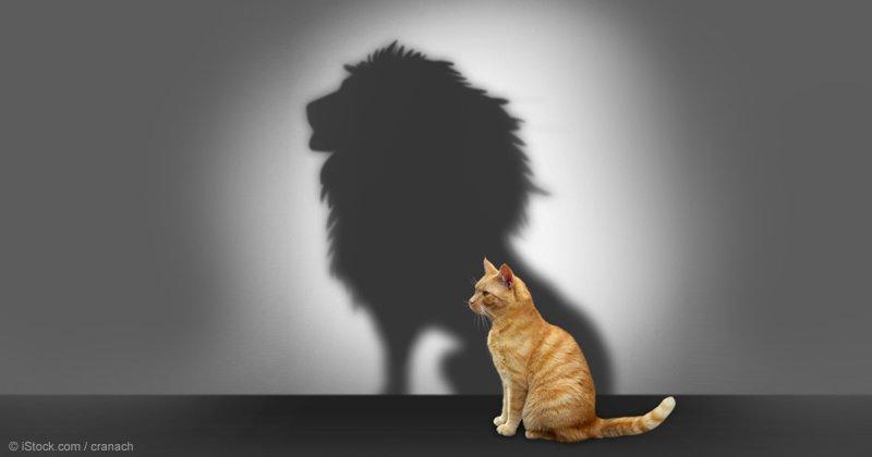 https://assets.roar.media/Tamil/2017/06/cat-lion-shadow-fb.jpg