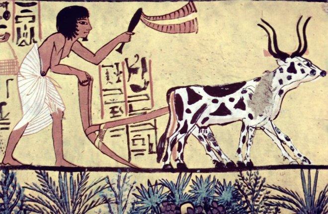 https://assets.roar.media/assets/4b3WTMcyk4O75EGm_The-background-history-of-organic-farming.jpg
