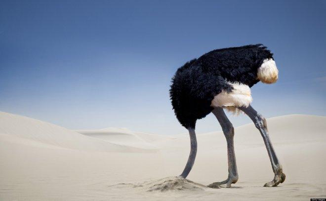 https://assets.roar.media/assets/BaQqkPyF5fl50tBJ_ostrich-in-sand.jpg