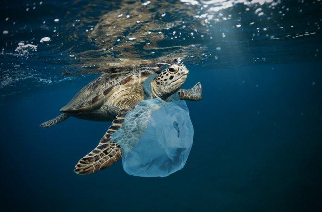 https://assets.roar.media/assets/S6ywVQX7flJiGuis_G20-summit-set-initiative-to-clean-up-oceans.jpg
