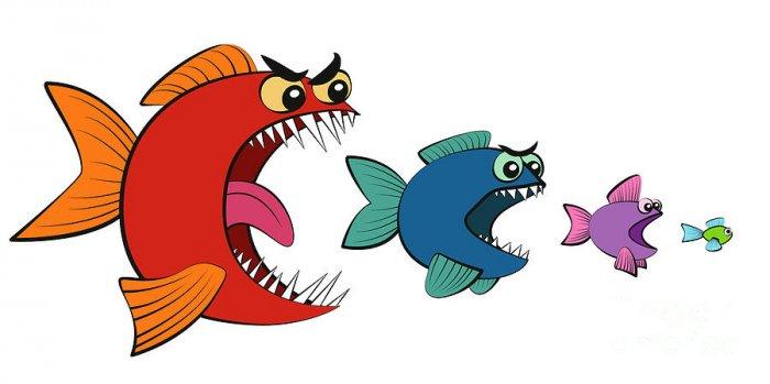 বড় মাছ যেমন ছোট মাছদের খেয়ে ফেলে তেমন সামাজিক অবস্থাকে বলা হয় মাৎস্যন্যায়; Image Source: pixels.com