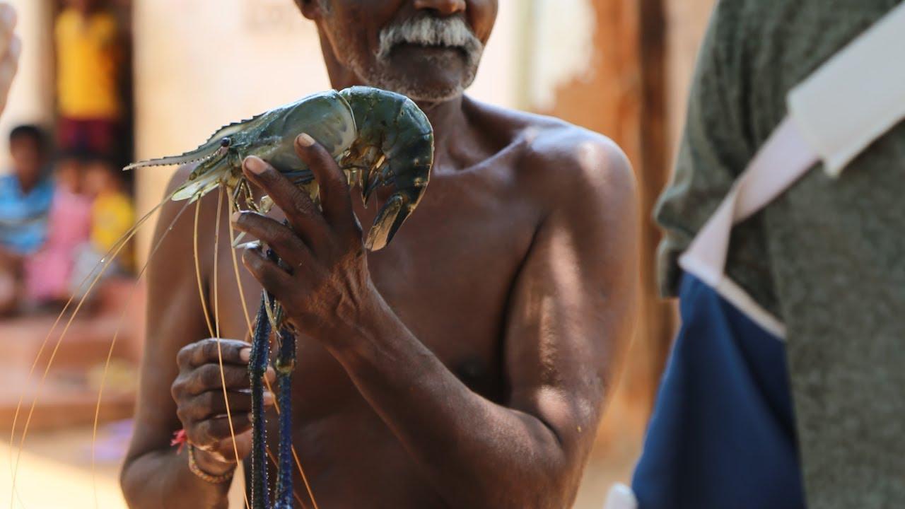 Prawn Export Industry In Sri Lanka
