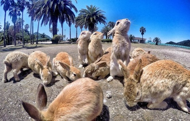 https://assets.roar.media/assets/o5eMpWgILGyHxZNz_rabbit-island-japan-1000x640.jpg