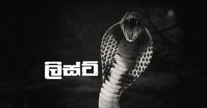 https://assets.roar.media/assets/vGcVkqnzpXOdKESQ_Most_Venomous_Snakes.jpg